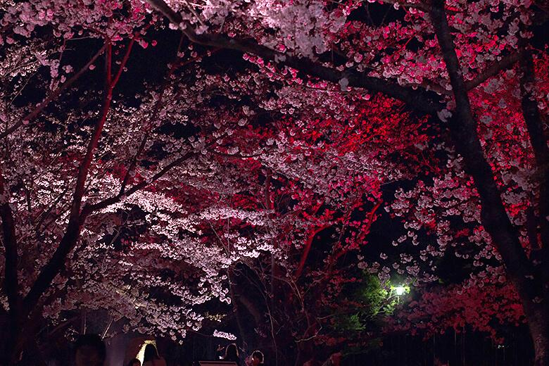 blossum_night
