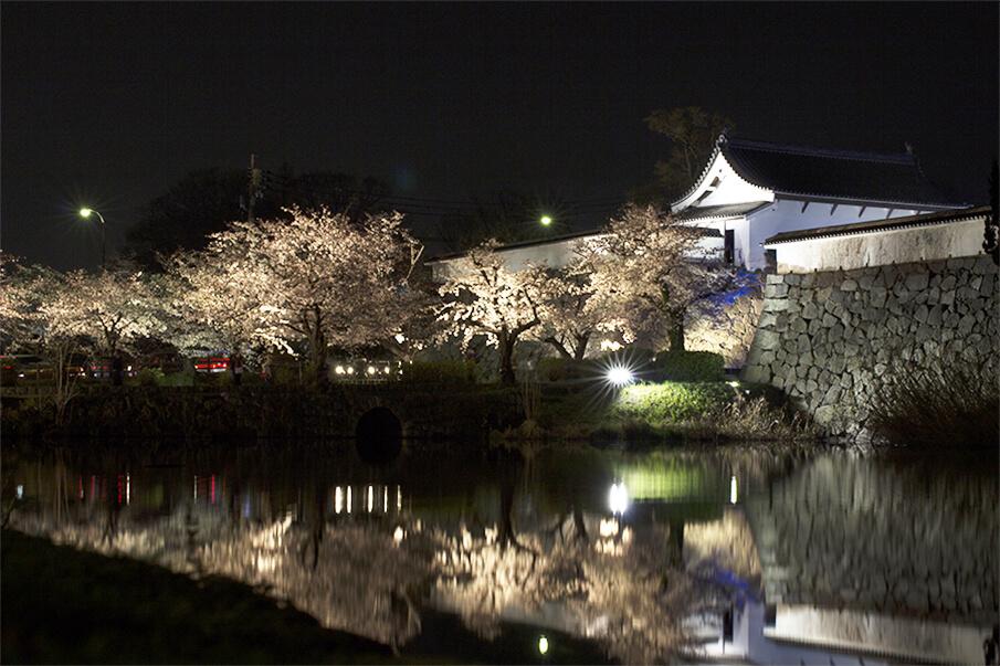 世界中の人が一目見ようと訪れる、日本の桜