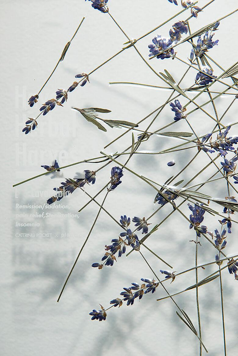引用元:plantica 公式サイト