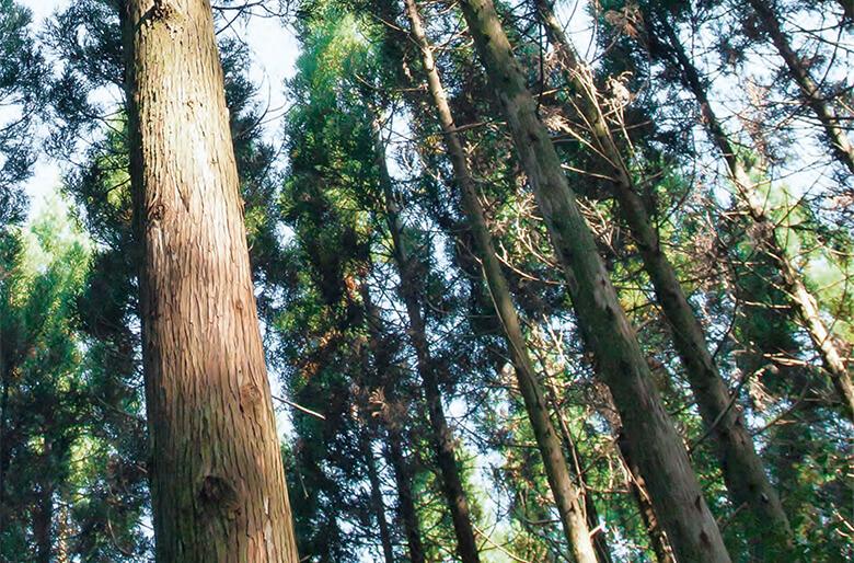 引用元:公式コンセプトブック「日本の木のワークスペース 『木とくらす』」