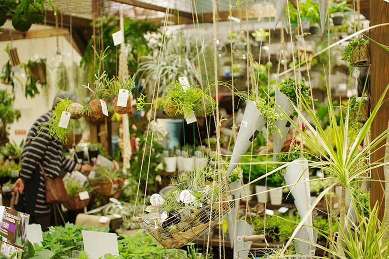 air_plants780