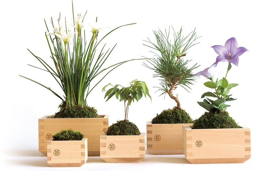 木枡×苔の黄金コンビ!日本の情緒を感じるグリーンインテリア「MASUMOSS」
